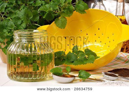 Erva doce erva-cidreira (Melissa officinalis), com limão em forma de coador e ingredientes de ervas te