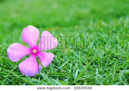 flower on the grass