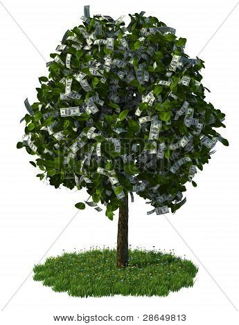 money tree, hundred dollar bills