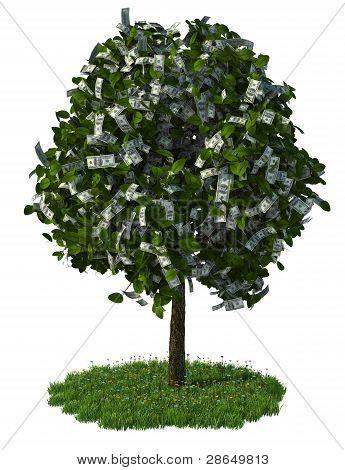 money tree, hundred dollar bills