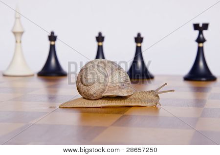 Chessboard With Snail And Chessmans