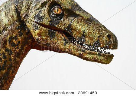 Deinonychus Dinosaur Head On White