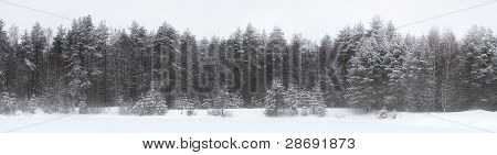 Winter Landscape In The Karelian Wood