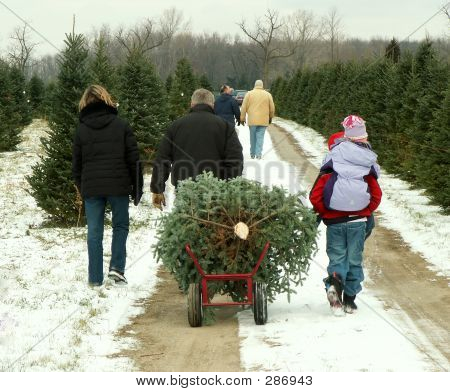 Christmas  Tree Cutting Family