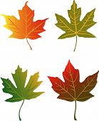 stock photo of fall leaves  - Assorted colorful autumn maple leaves vector illustration - JPG