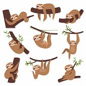 Sloth On Branch. Cute Little Kid Sleepy Animal On Branch In Zoo Playing With Baby Hanging Vector Cha poster