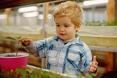 Boy Planting Seeds. Little Boy Planting Seeds In Greenhouse. Boy Planting Seeds To Grow A Tree. Boy  poster