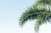Palm Leaf On Blue Sky With Copy Space Holy Week Easter Concept Long Weekend Spring Break. Palm Sunda poster