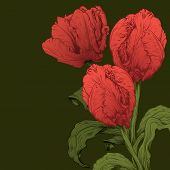 Vector Tulips Flower.