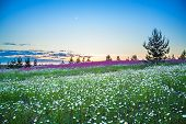 Beautiful Spring Night Landscape With Blooming Wild Flowers In Meadow. Summer Field With Flowering W poster