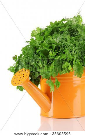 Orange watering can with parsley and dill isolated on white