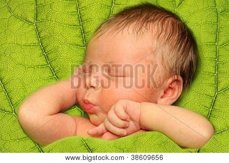 Sleeping Newborn Baby Boy in a Green Leaf