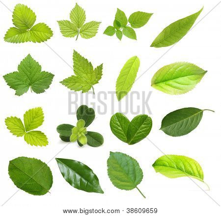 Set of berry and fruit leaves isolated on white background