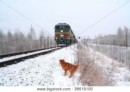 redhead dog near train