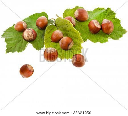 hazelnut filbert in green leaf  isolated on white background