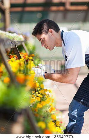 male florist working inside nursery