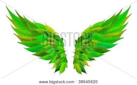 Green Wings Concept