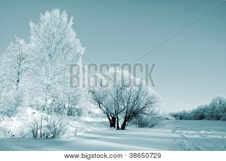 bushes in snow on coast river