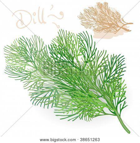 Fresh fennel leaf on white. Vector.