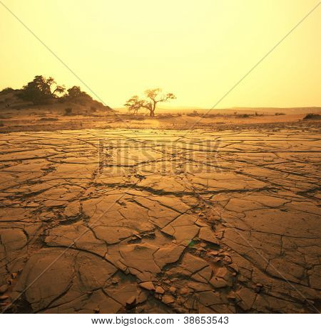 paisaje seco