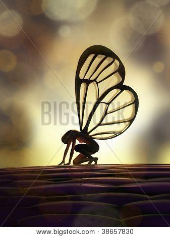 borboleta fada