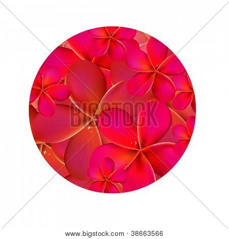Frangipani Shere, Isolated On White Background, Vector Illustration