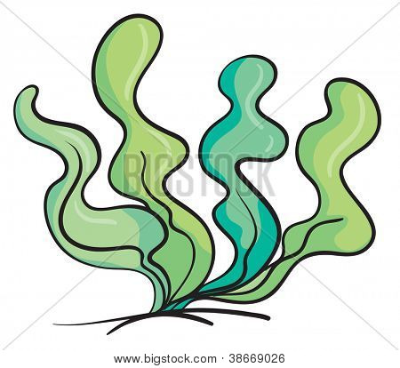 illustration of an under water plant on a white background