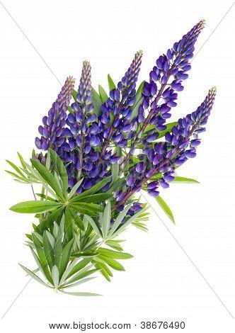 Flying Blue Flowers