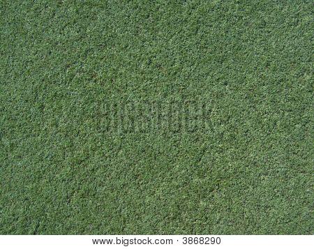 Turf Texture