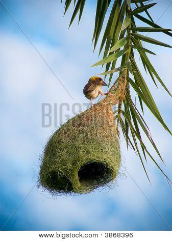 The Bird With Nest