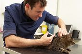 foto of veterinary surgery  - Male Veterinary Surgeon Examining Cat In Surgery - JPG