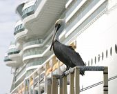 Pelican Waiting For His Ship To Come In poster