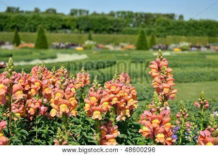 Boxwood Decorations And Flowers In Herrenhausen Gardens, Hanover, Germany