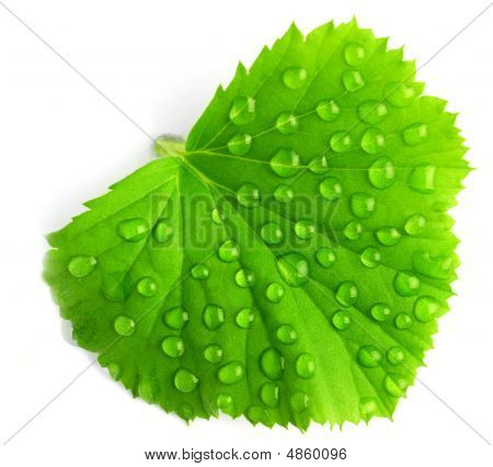 Leaf With Drops