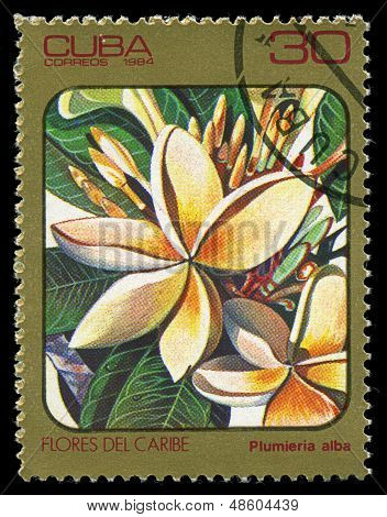 Cuba - Circa 1984: Post Stamp Printed In Cuba Shows Image Of Plumeria Alba (plumieria) From Caribbea