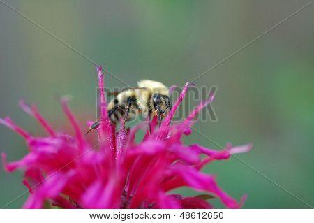 Tasty Nectar