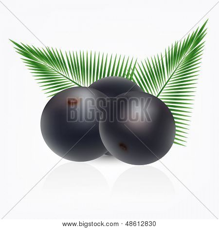 Vector amazon acai fruit with palm leaves on white background.