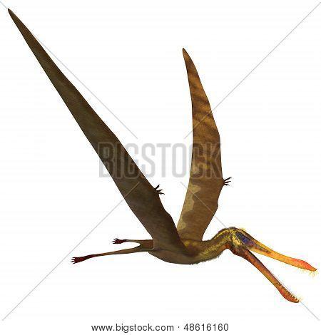 Anhanguera Pterosaur