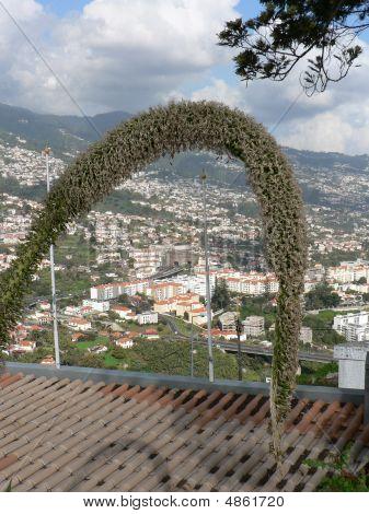 Arched Elephant Cactus Flower