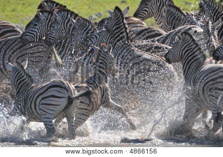 Saiu das Zebras