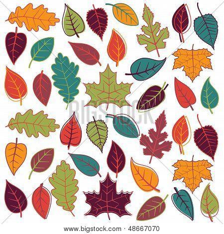 Large Vector Set of Abstract Autumn Leaves