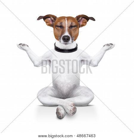 Perro de yoga