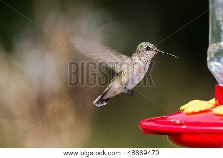 Pássaro cantarolando