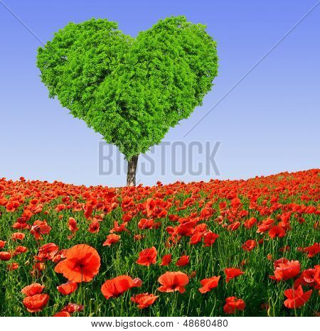 poppy field with tree from the shape heart