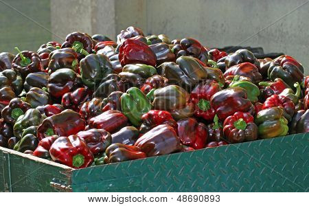 Bunch Of Peppers Over The Truck Ready To Be Sold By Greengrocers