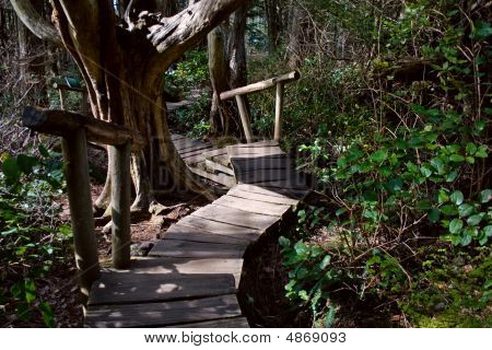 Rainforest Boardwalk With Steps