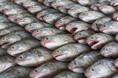 stock photo of bass fish  - A group of fish that ready to Wholesale in fish market in Thailand - JPG