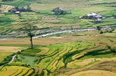 Alone Tree On Top Of Hill, Terraced Fields, Small Stream Flowing Through In Lower, Mu Cang Chai Dist