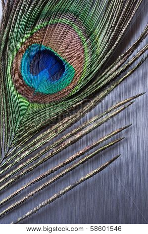 Peacock feather on brushed metal background