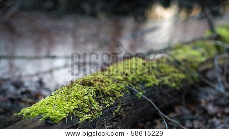Mosses Growing On A Dead Tree Trunk